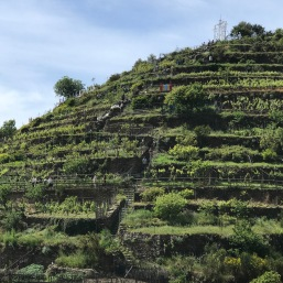Vineyard with a steep trail!